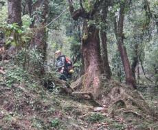 Erst einmal durch Wälder